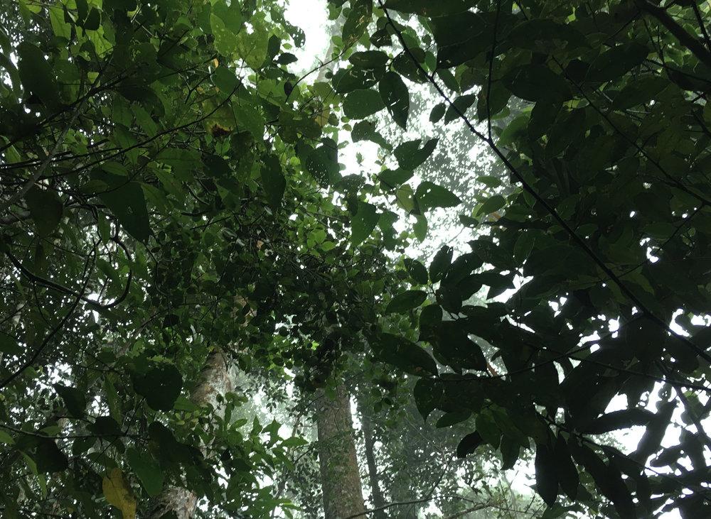 rainforest_sabah.jpg