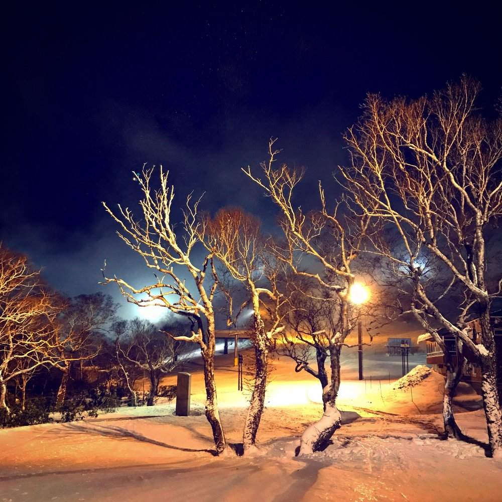 Night skiing through Japanese birch fields