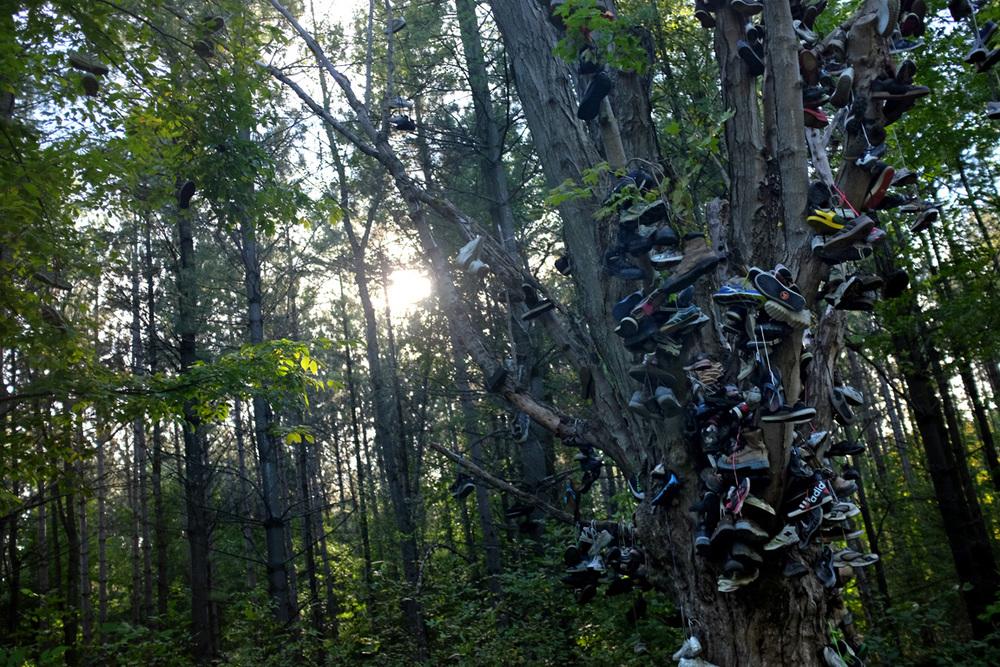 Shoe-Tree-2-100dpi.jpg