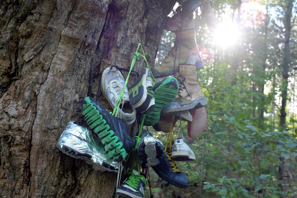 Shoe-Tree-5-100dpi.jpg
