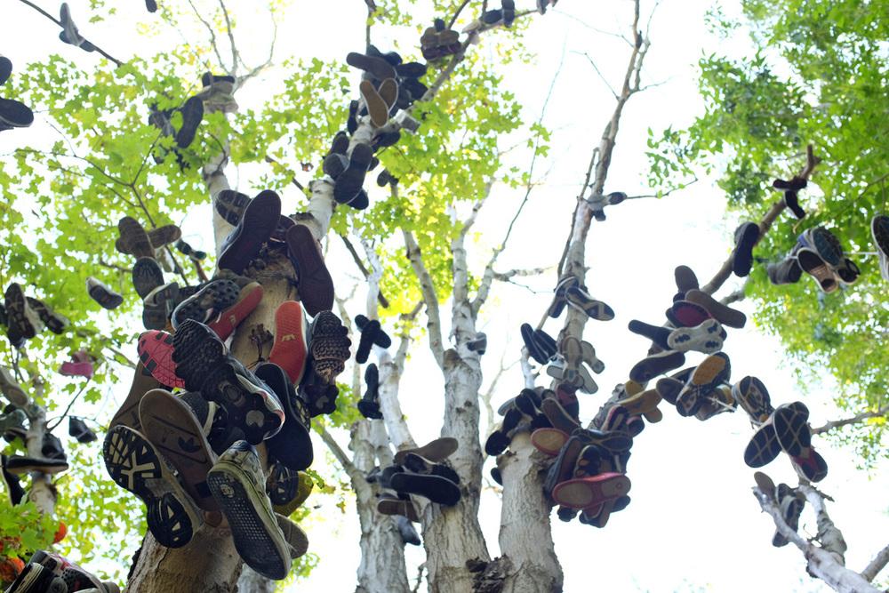 Shoe-Tree-8-100dpi.jpg