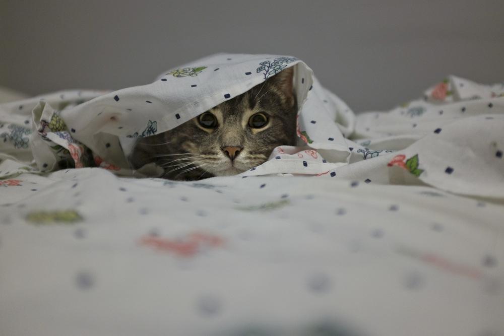 Cat Fort-100dpi-2.jpg