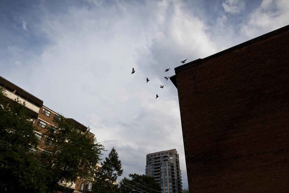 Birds-rgb-100dpi.jpg