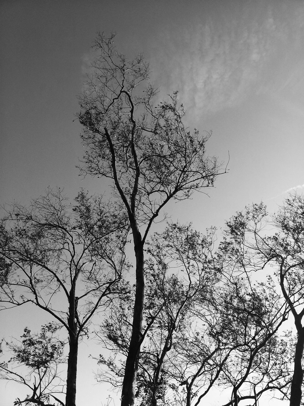 Trees_BlackWhite.jpg
