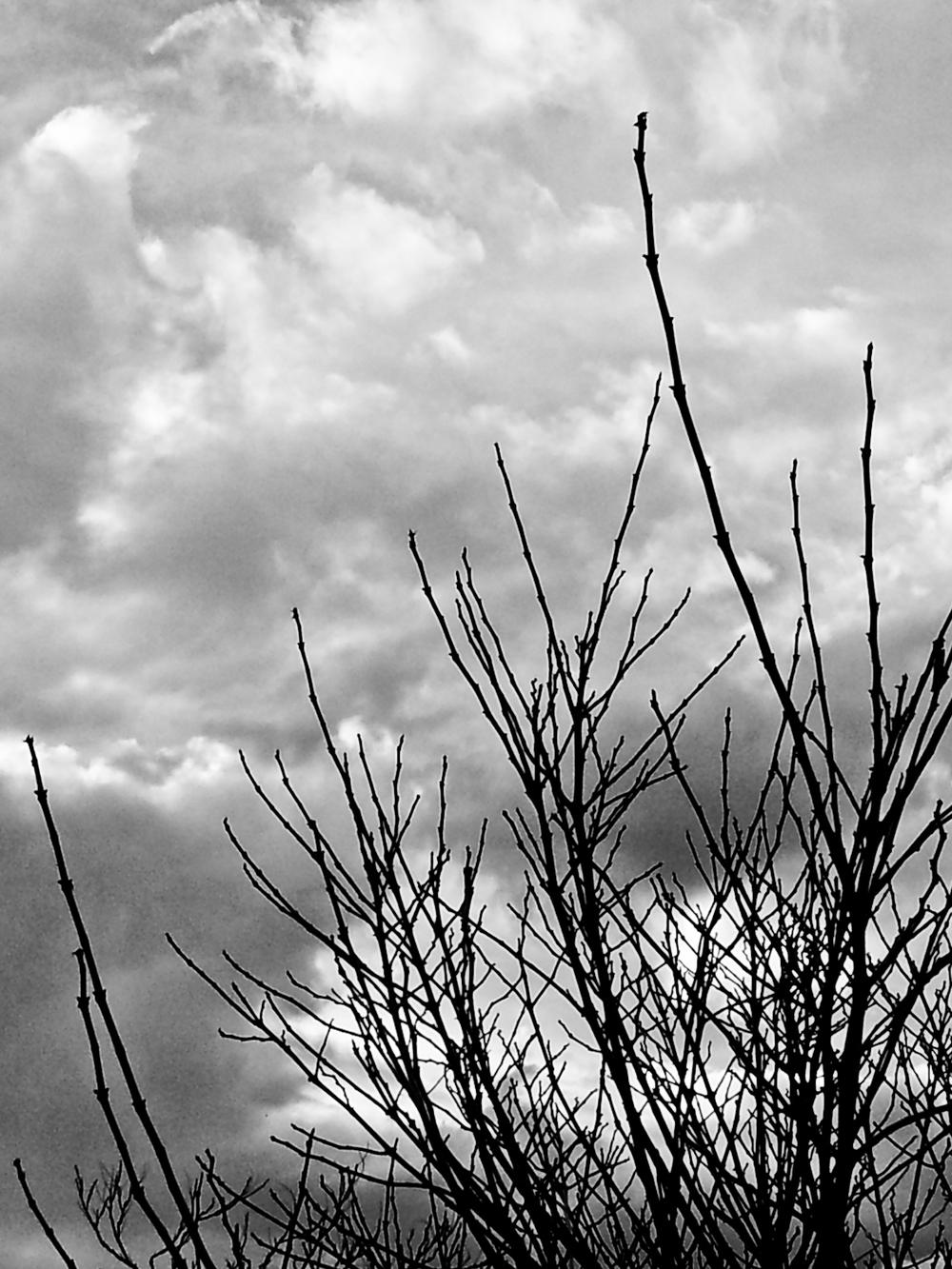 BW_TreeBranches.jpg