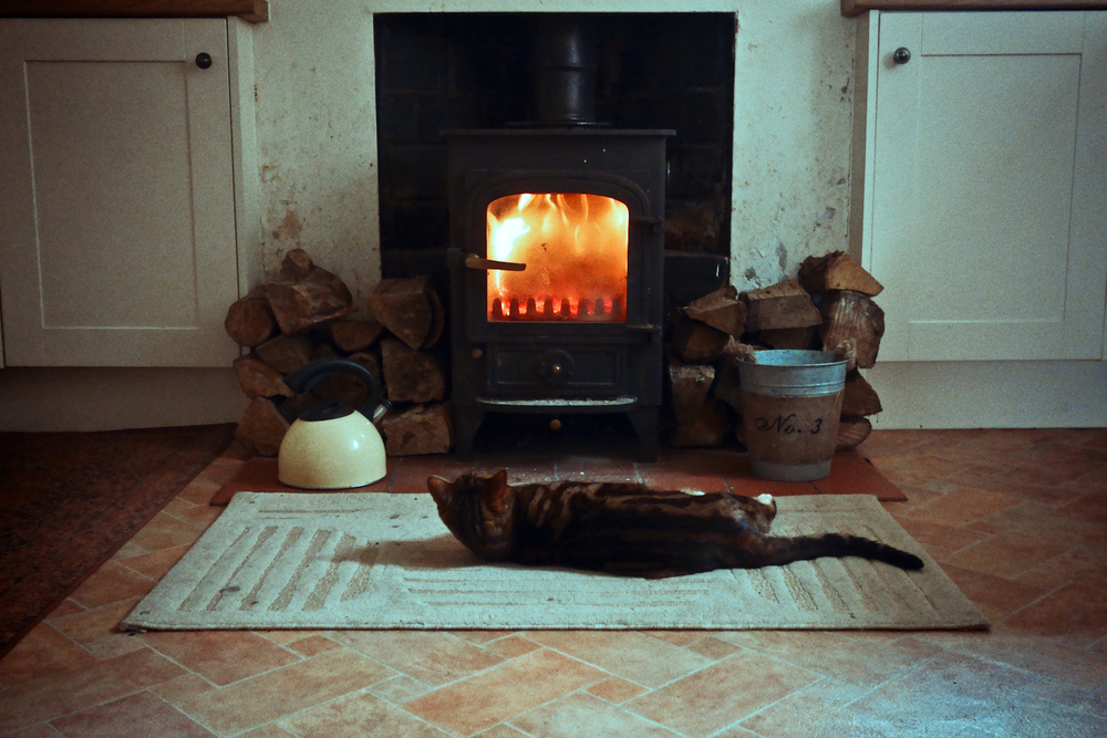 Fire Cat.jpg