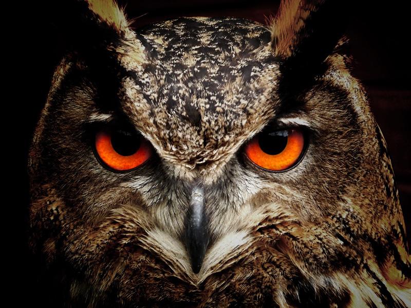 carnelian-owl.jpg