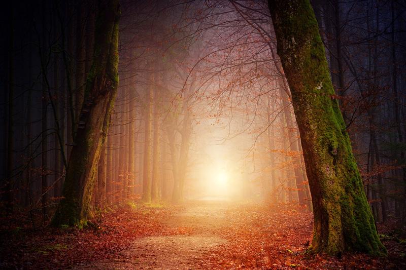 carnelian-forest.jpg