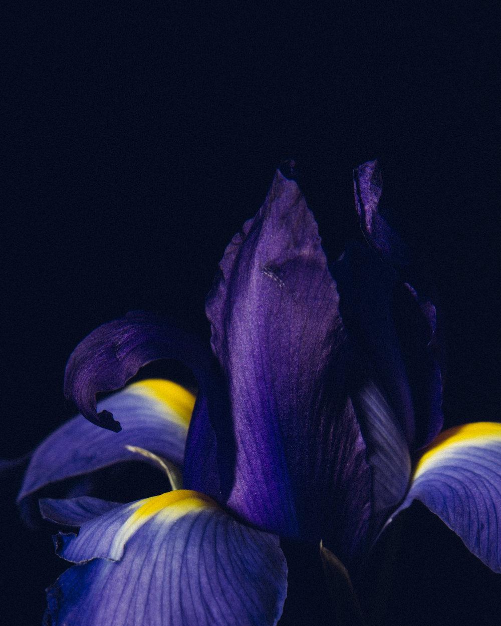 WTD.FlowerDSC_0831 copy.jpg