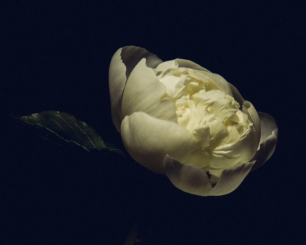 WTD.FlowerDSC_0840 copy.jpg