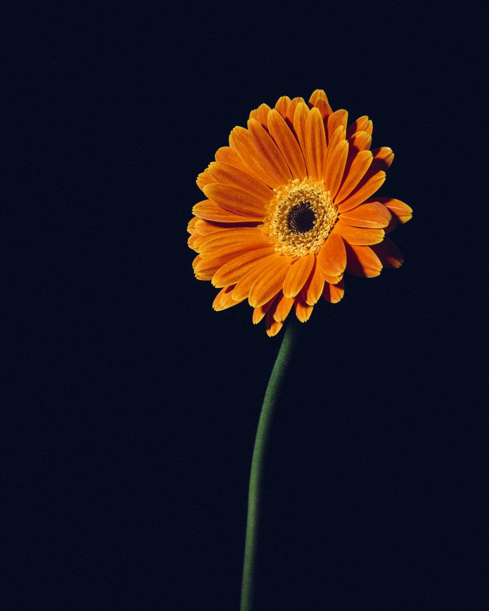 WTD.FlowerDSC_0846.jpg