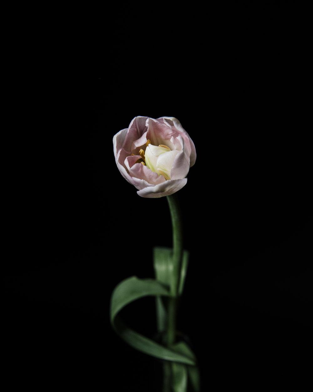 WTD.FlowerDSC_0848 copy.jpg