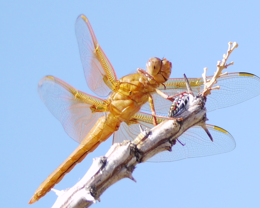 Happy dragonfly with snack