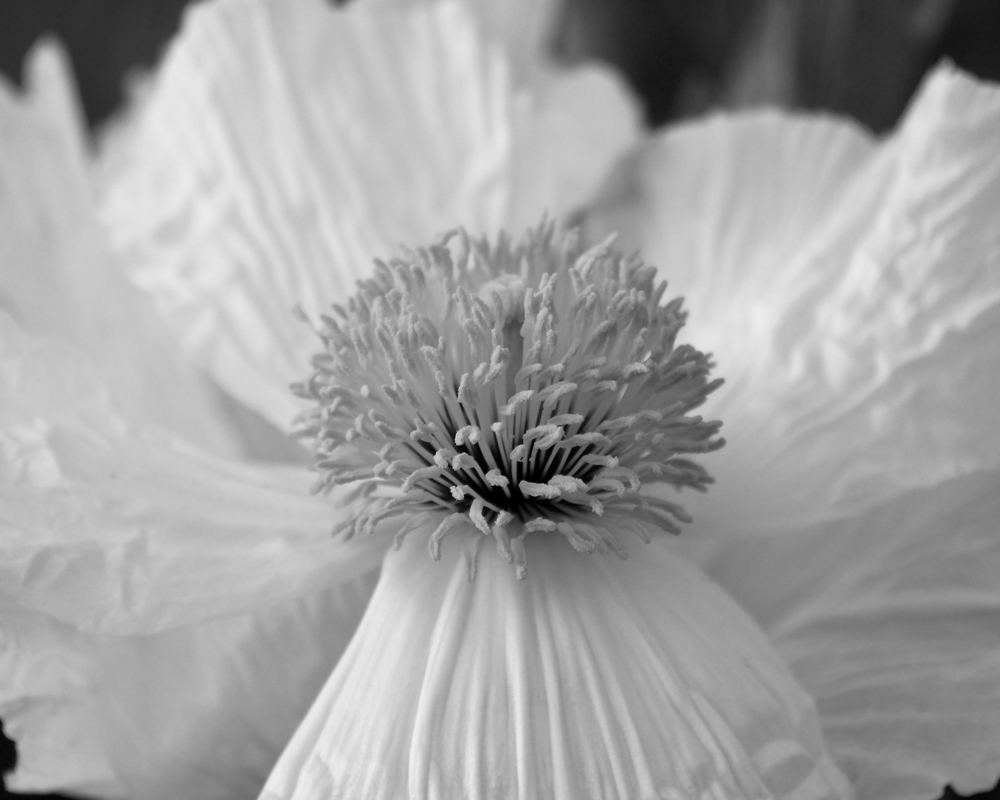 Paper Petals in Black and White