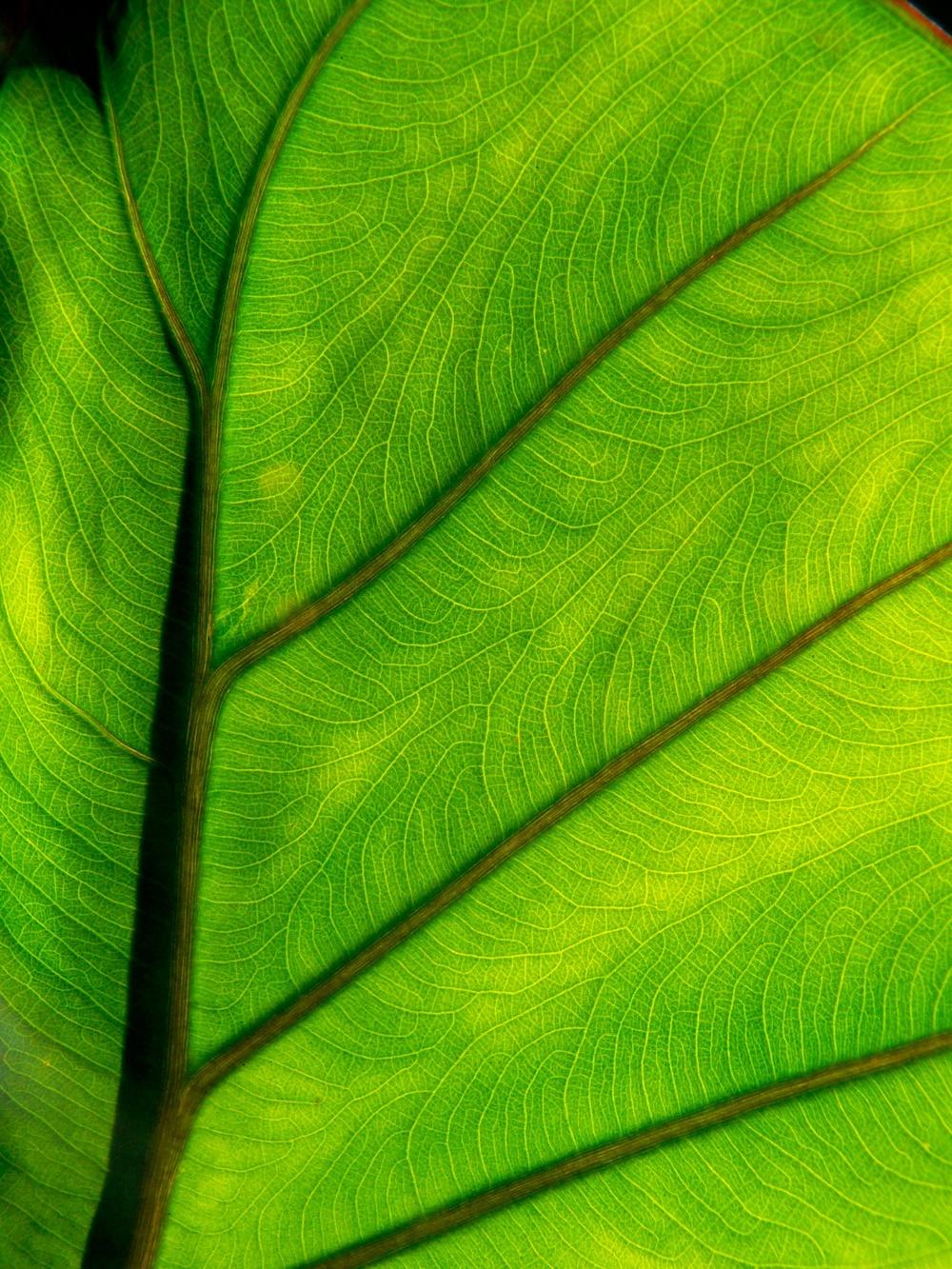 Tropical Leaf Detail - color