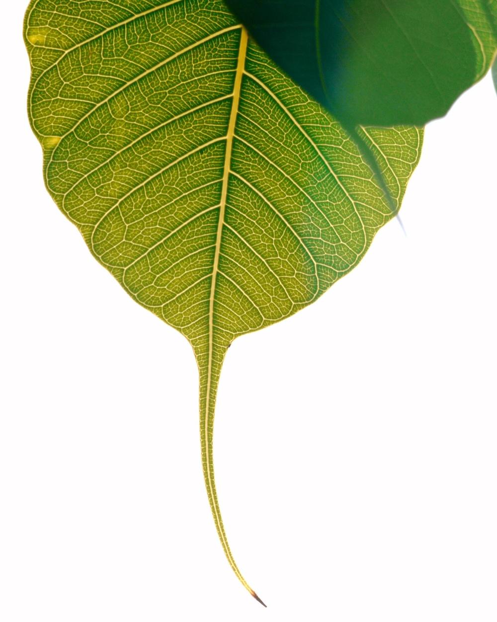 Leaf-Tree of Knowledge