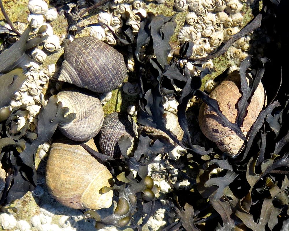 Sea snail community