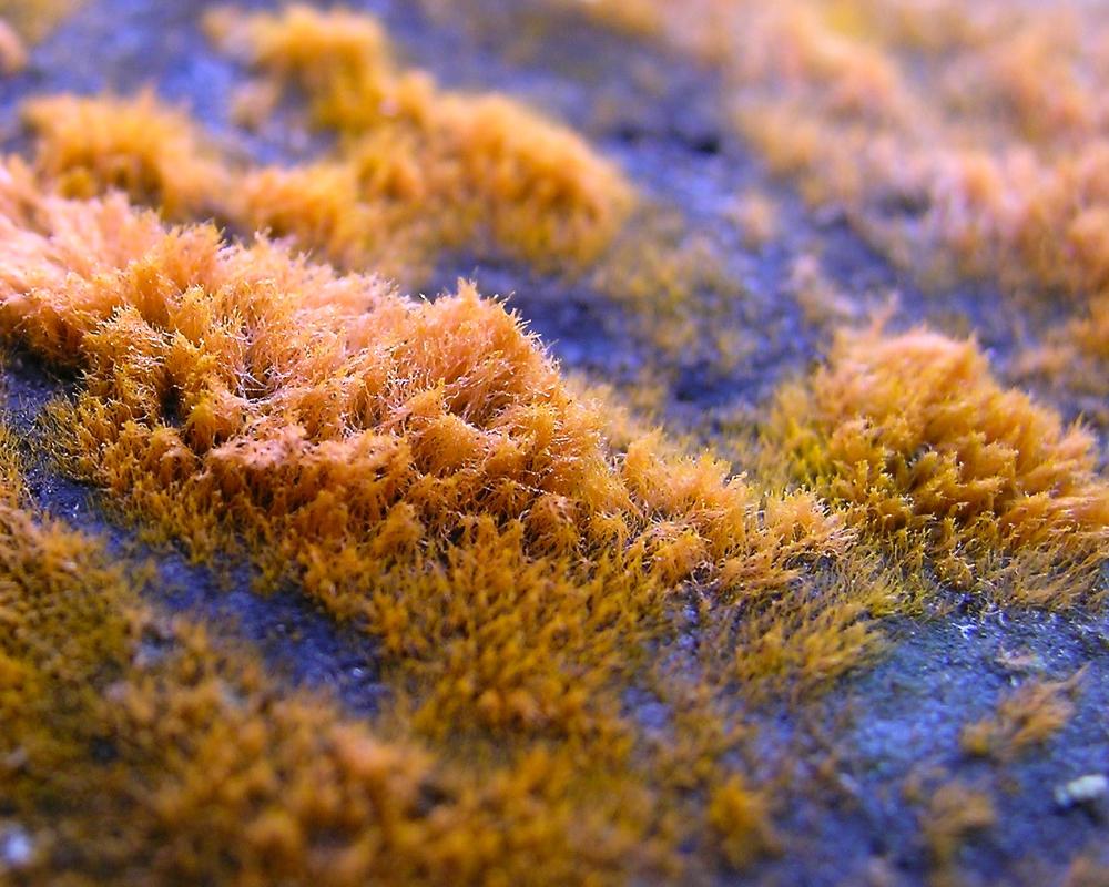 Fuzzy Orange Fungus