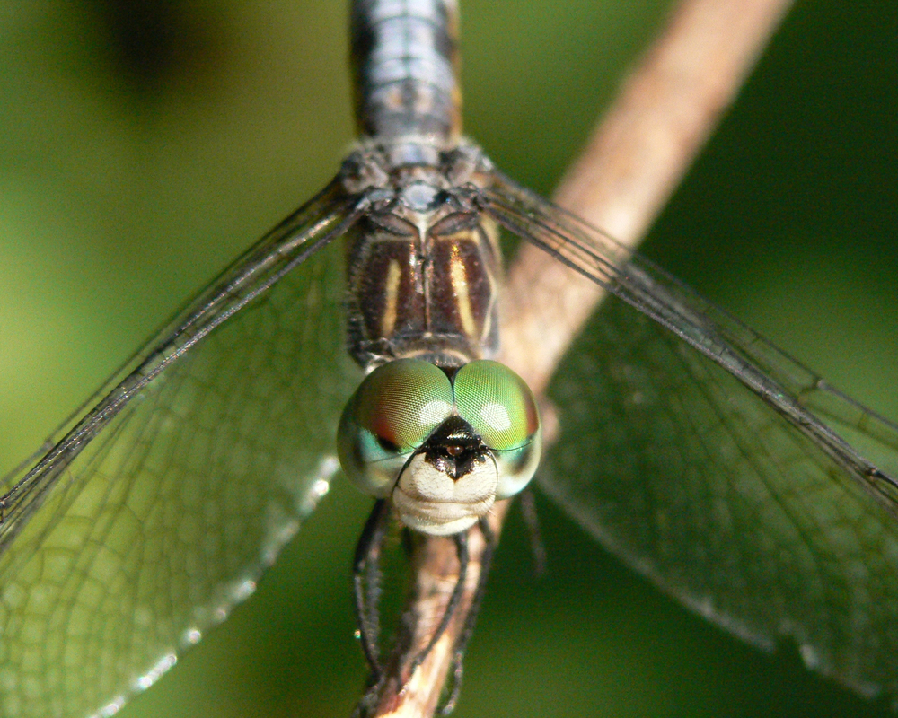 My first dragonfly firend - not smiling