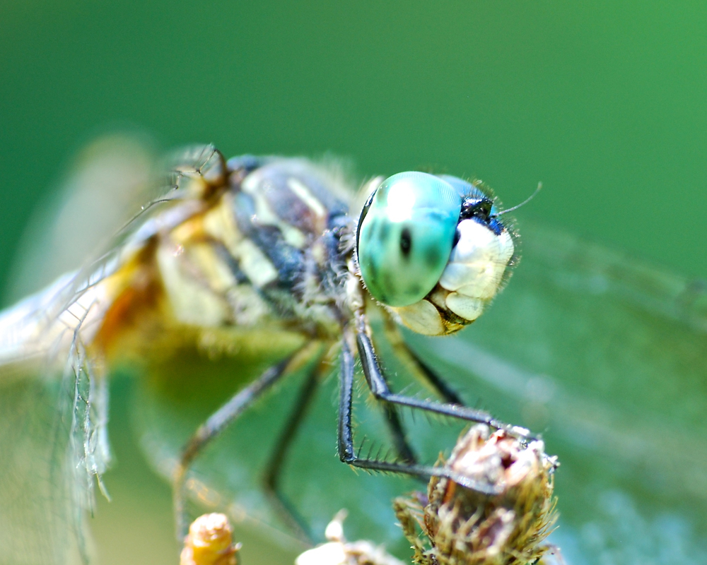 What a face! Dragonfly (of course)