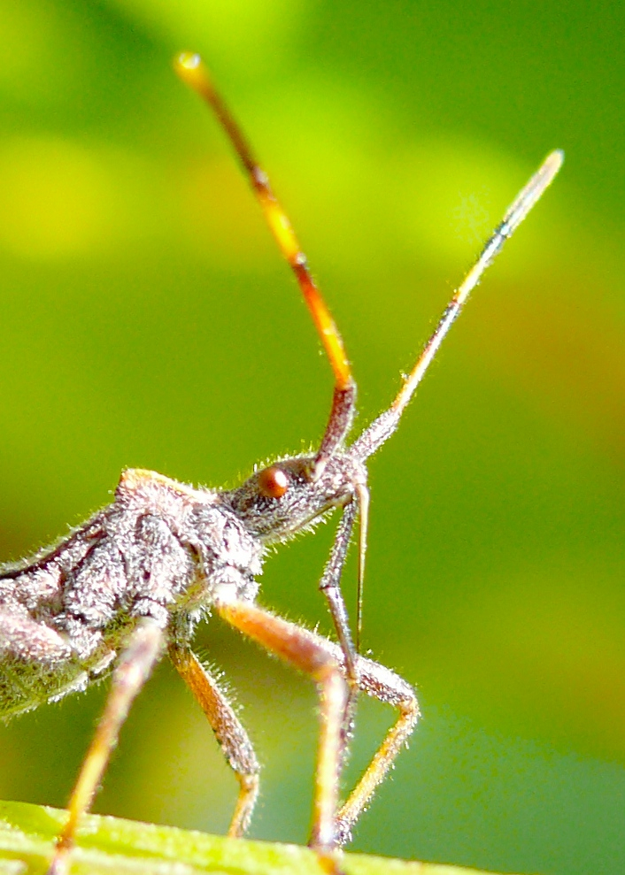 Stink bug in the sun