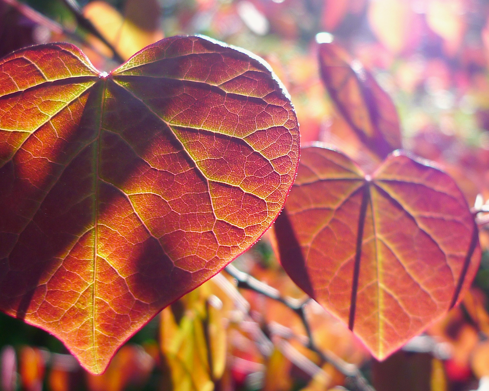 Fall Leaves in the sun