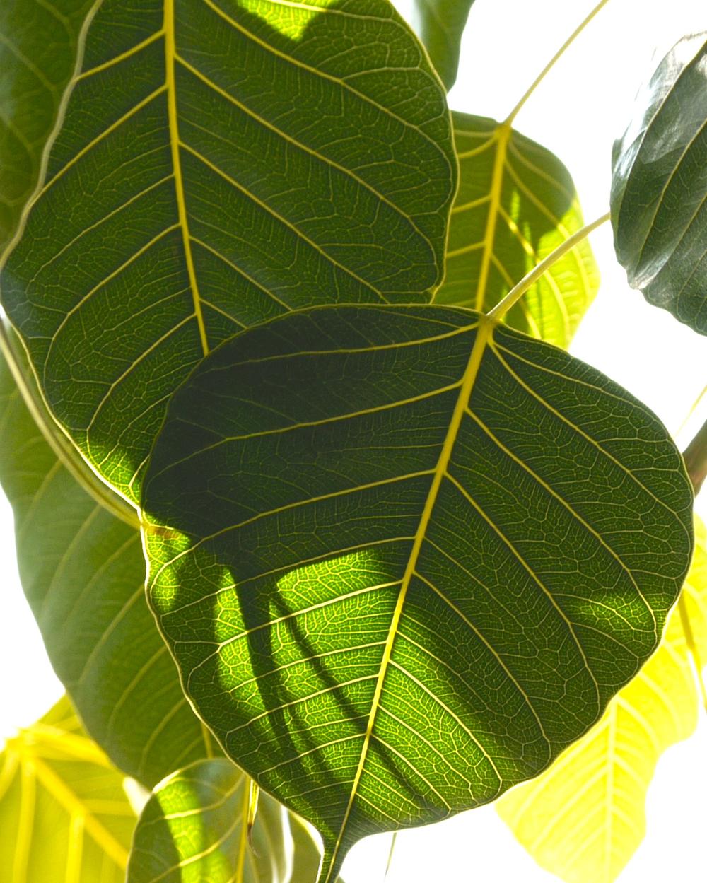 Leaves of Knowledge