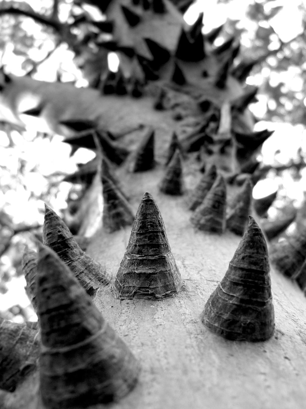 Floss Tree