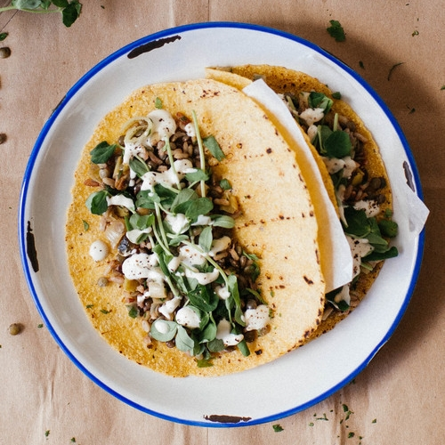 mujadra tacos w/ leeks spring herbs + pea tendrils