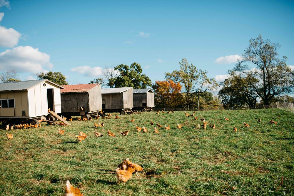 a day at stone barns - pocantico-hills, ny | dolly and oatmeal