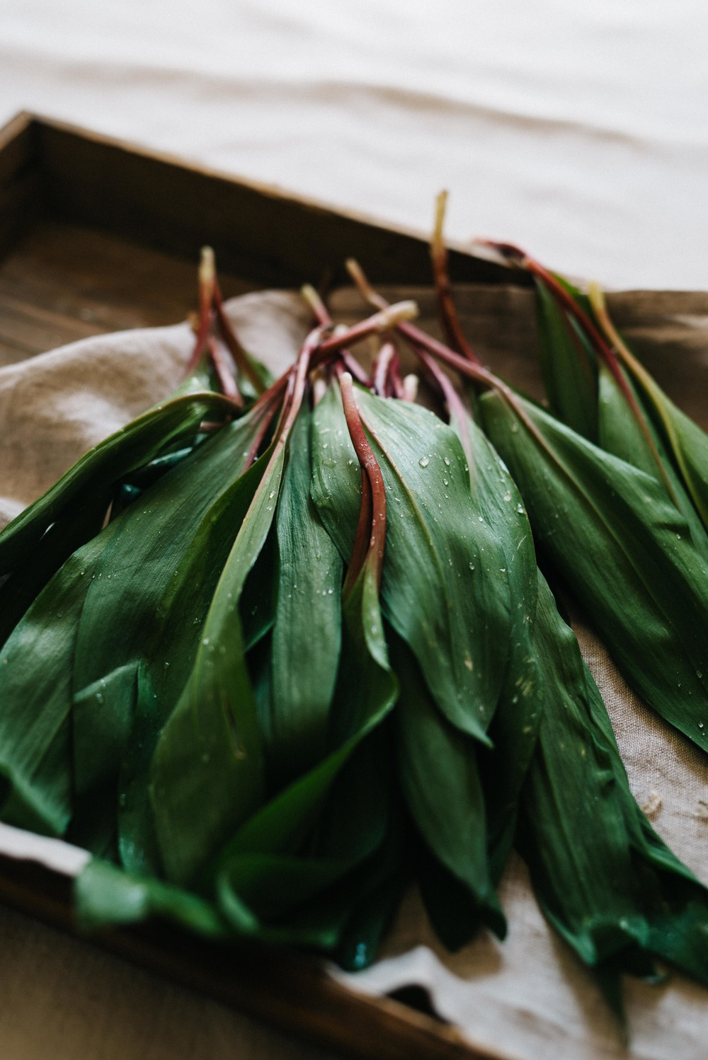 ramps | dolly and oatmeal