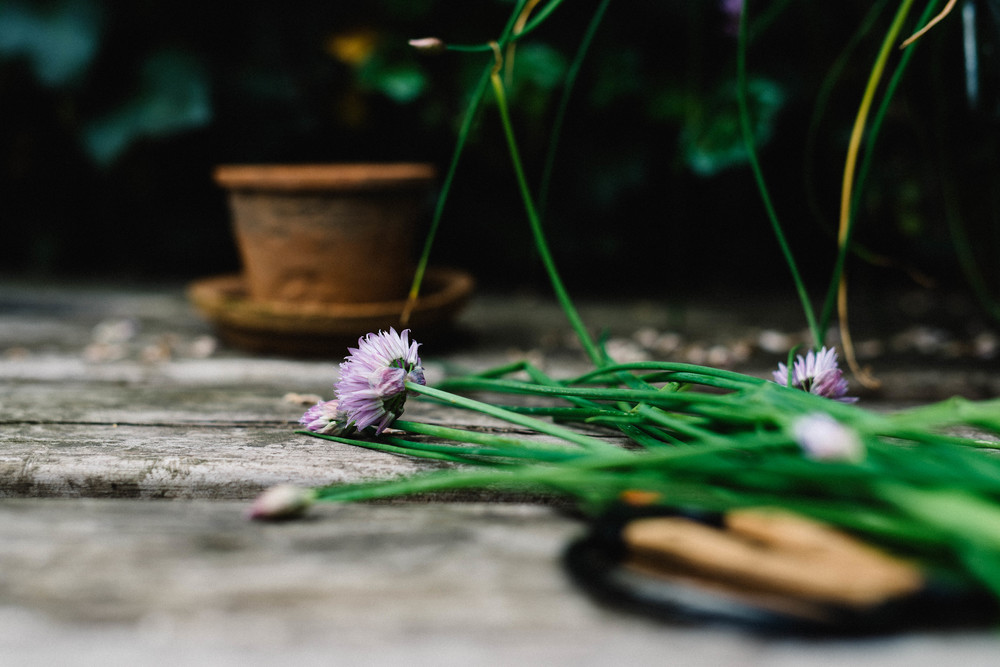 chive flowers | dolly and oatmeal