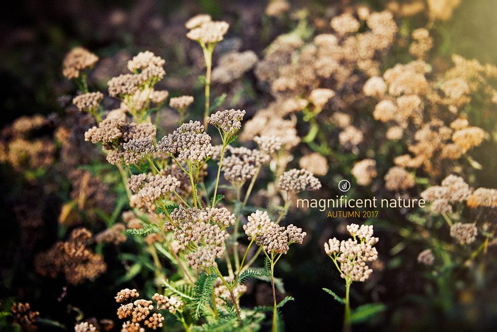 Flora4967.jpg