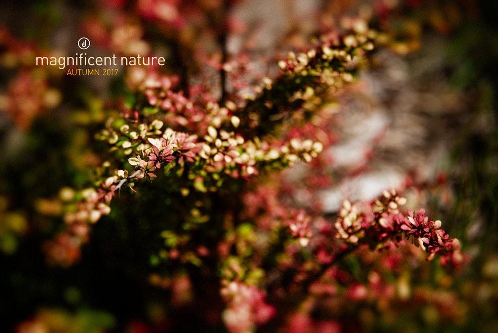 Flora5019.jpg