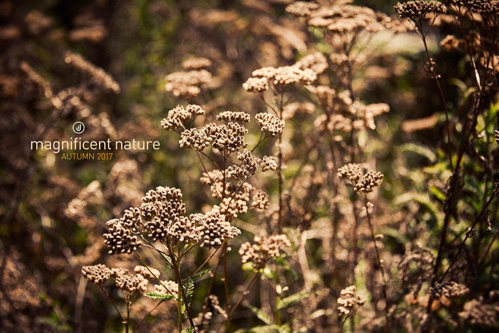 Flora4970.jpg