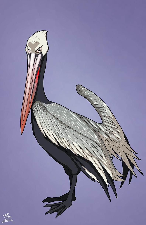pelican_web.jpg