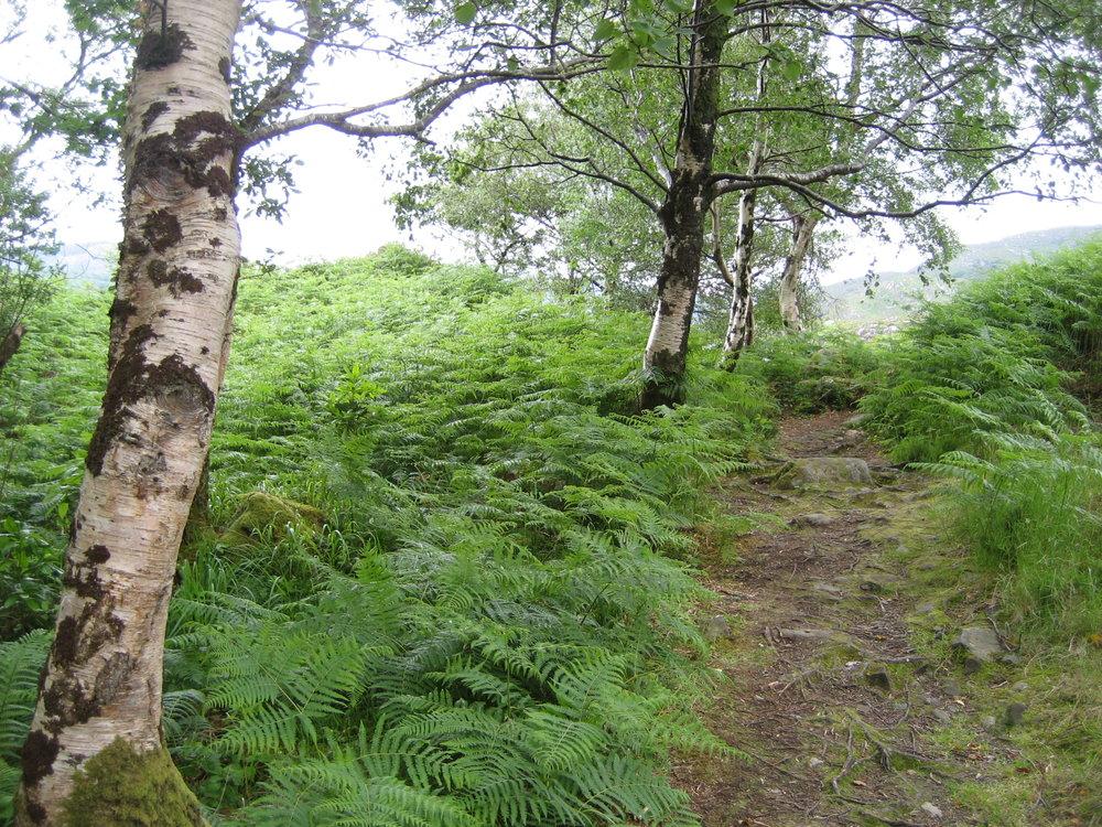 I. Birch trees.JPG