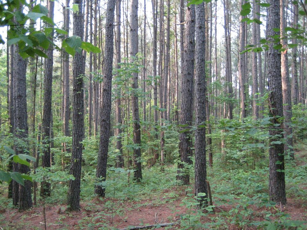 Faery Woods.jpg