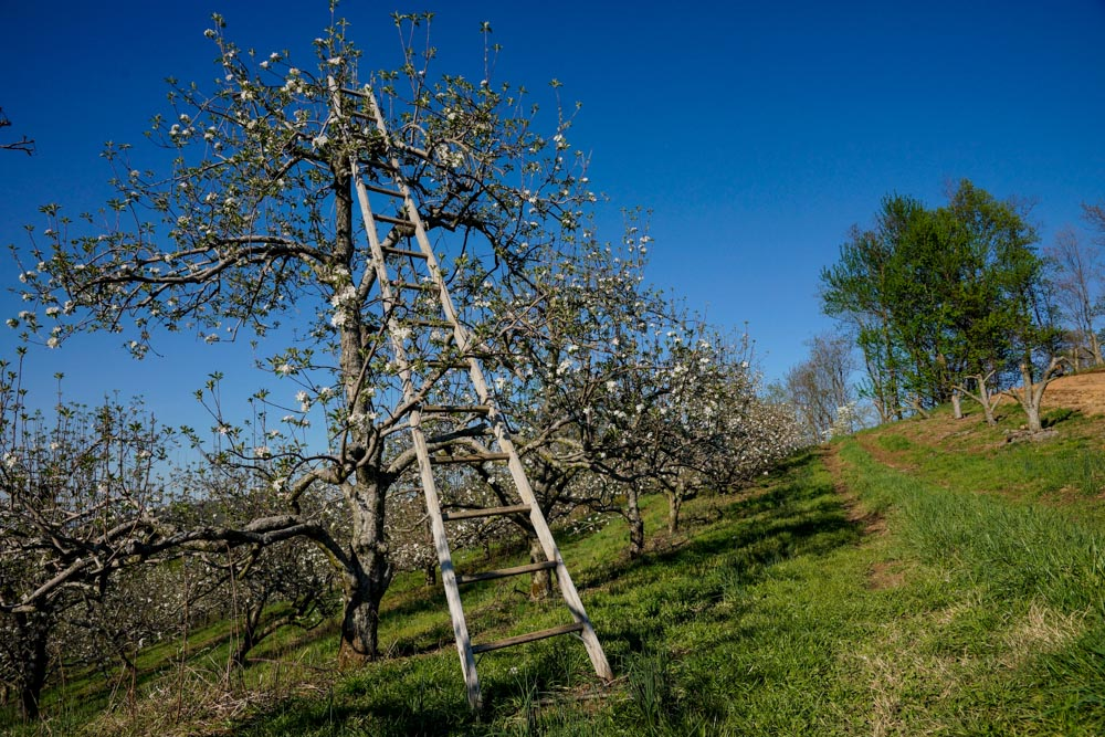 Brushy_Mountain_Orchard-14.jpg