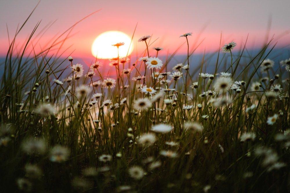ironvilleflowers-1.jpg