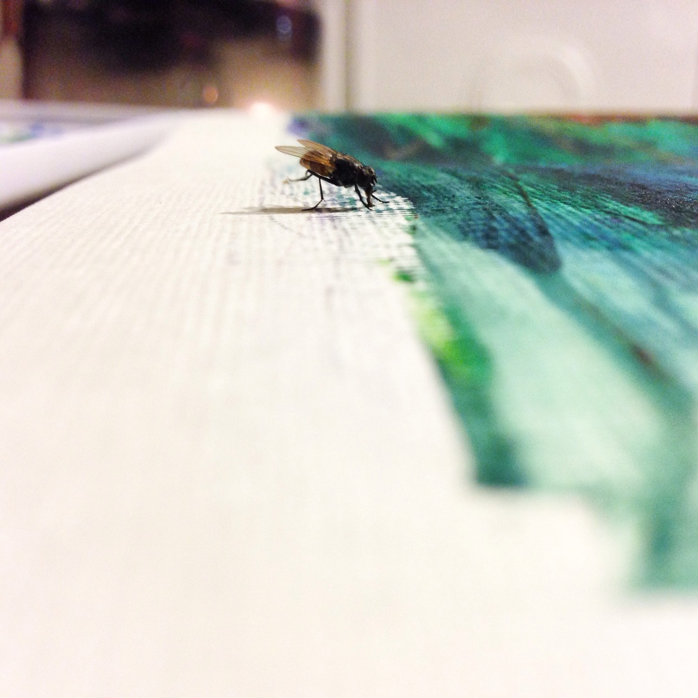 This fly hung out with me all night while painting.