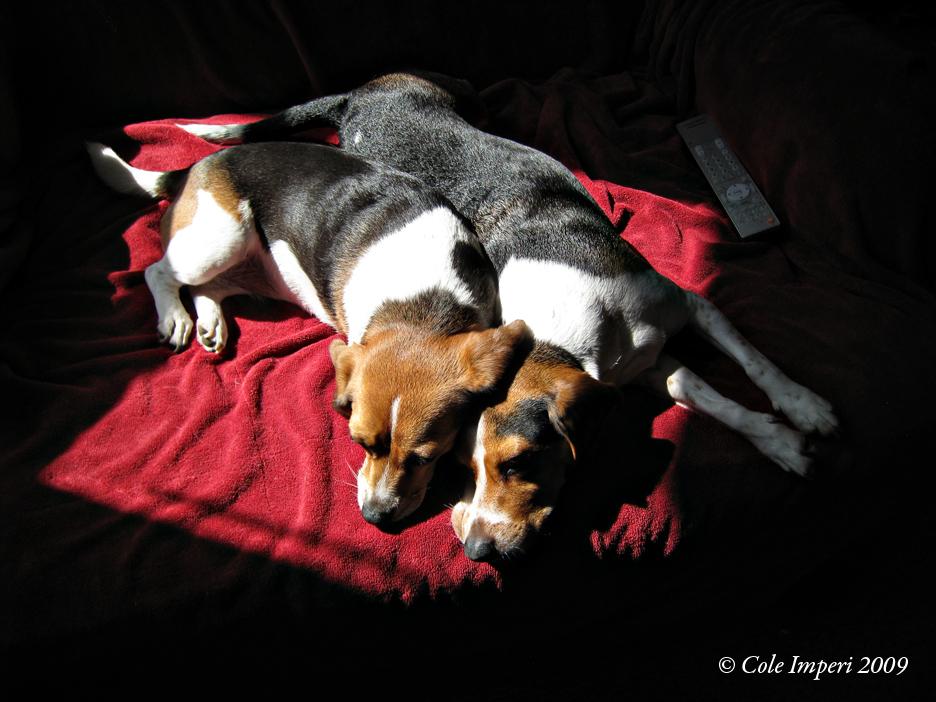 Beagle Sun Spot Sharing