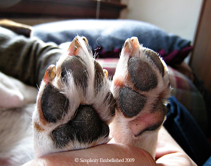 Beagle Paw Before and After