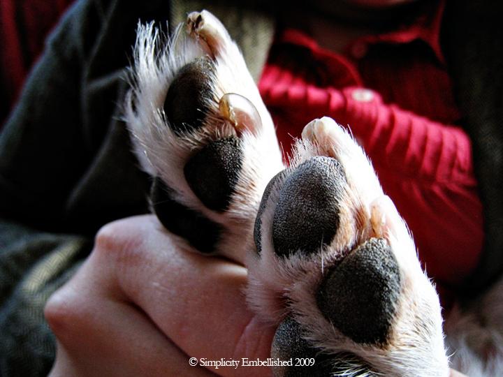Hairy Beagle