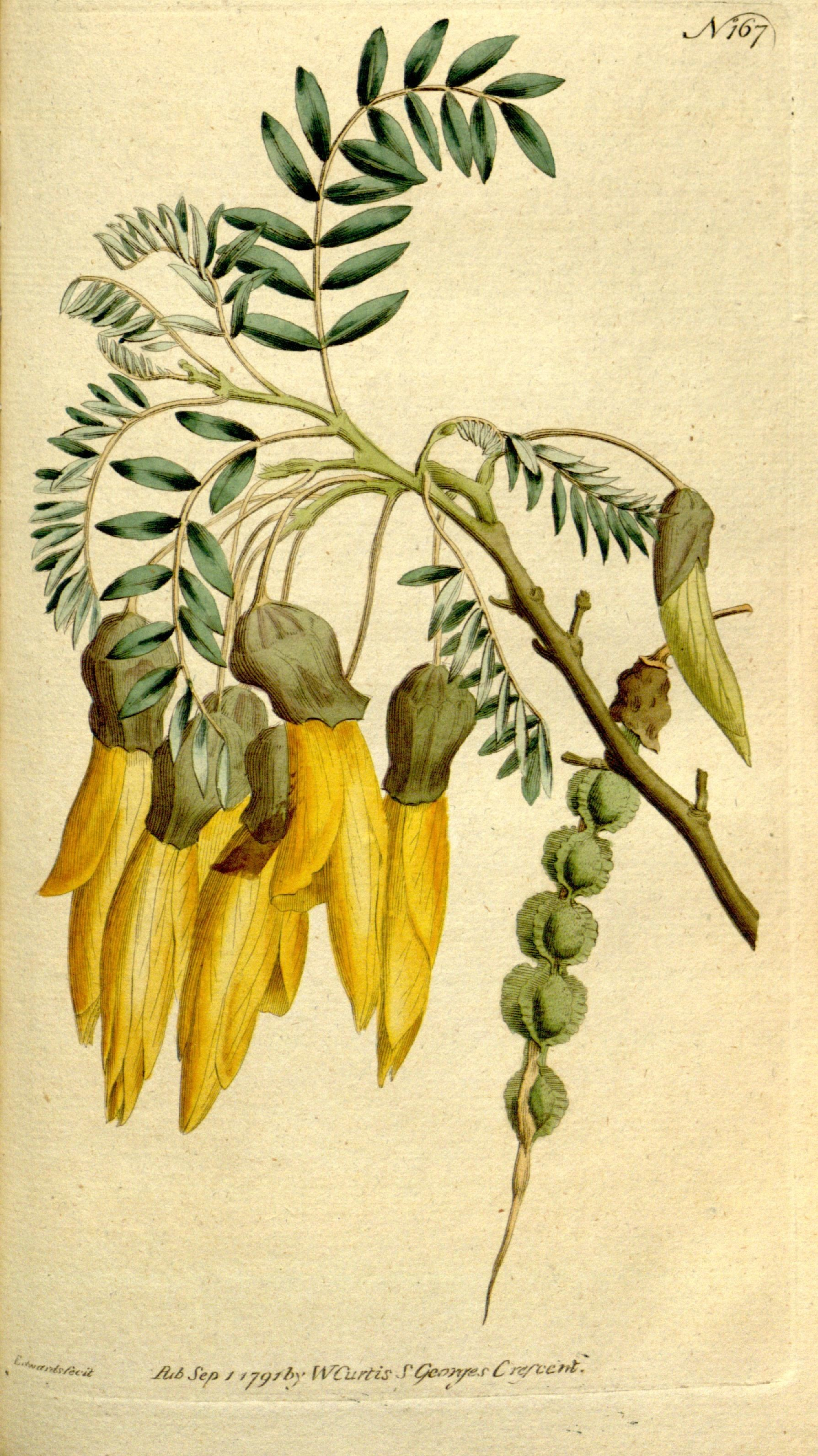 Biodiversity-Heritage-Library-Peppers