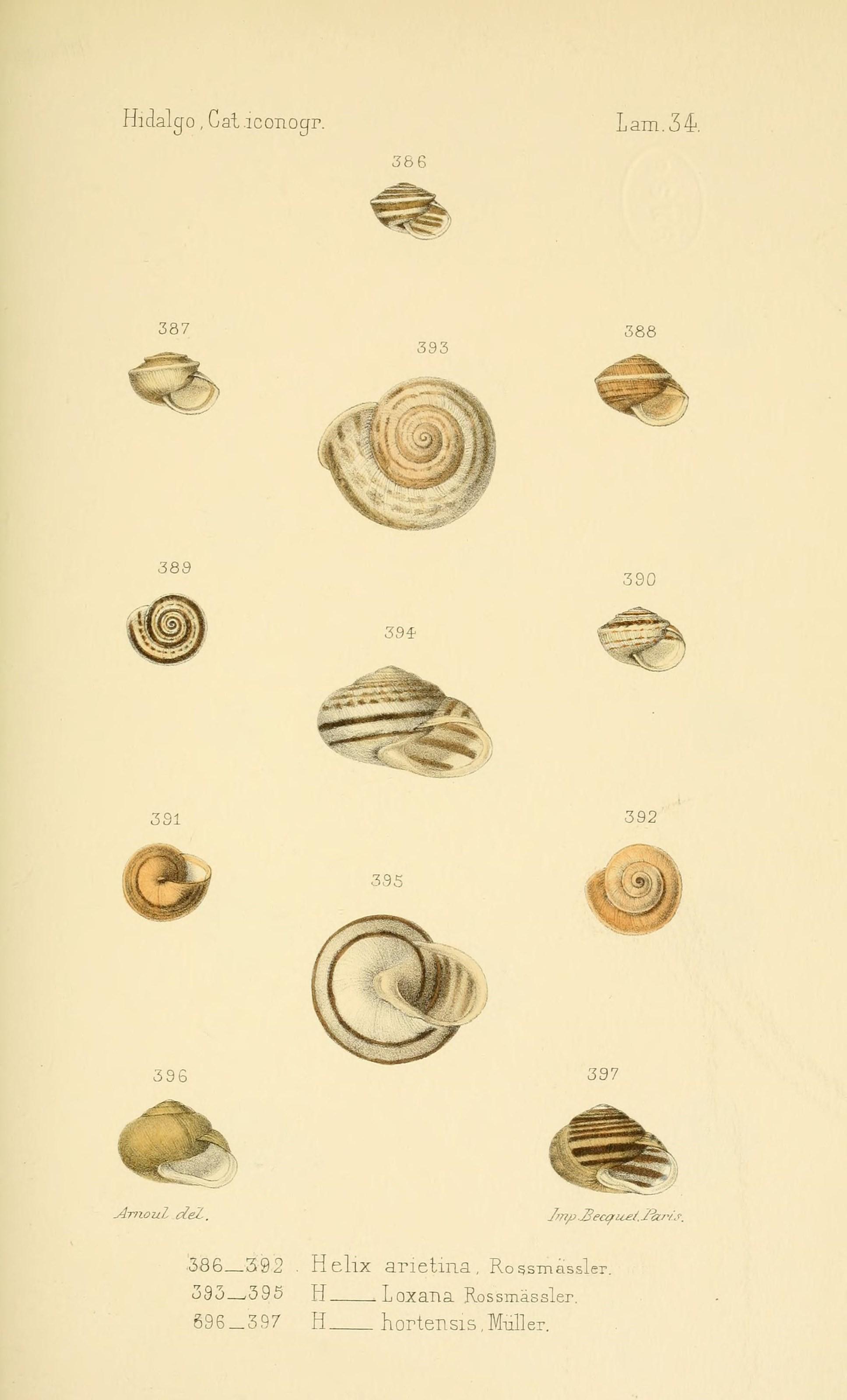 Biodiversity-Heritage-Library