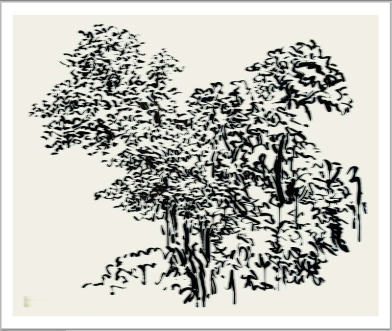 "Sumi Tree  , archival pigment print,   34x44""2014."