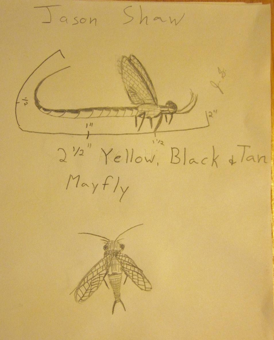 Field Sketch.jpeg
