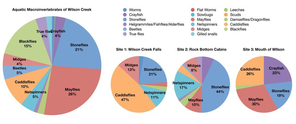 2011 Wilson Creek Survey