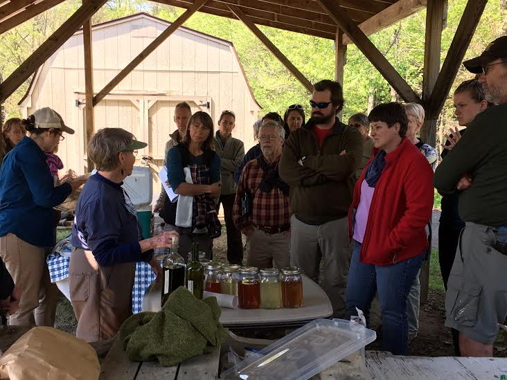 Participants sampled some foraged treats